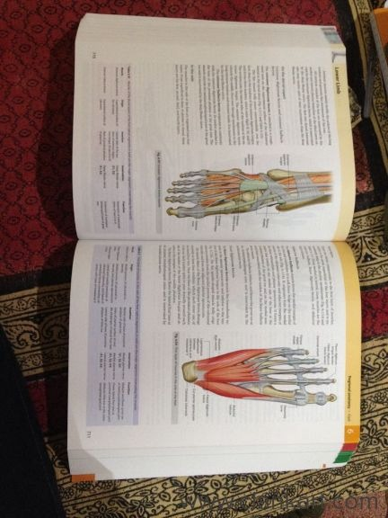 Anatomy - New Books